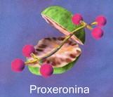 proxeronina