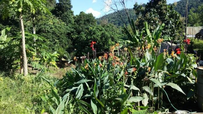 Trecking por la selva hacia las cataratas, Chiang Mai, Tailandia, 2015