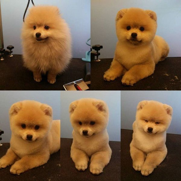 The Best Repinned Before After Grooming Photos Before Pictures