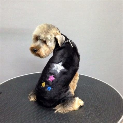 The Best Dog Glitter Temporary Color Styling Gel丨Dog Hair Glitter Pictures