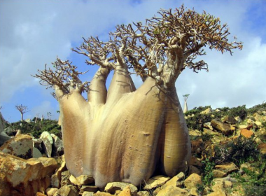 Socotra, Yemen (2)