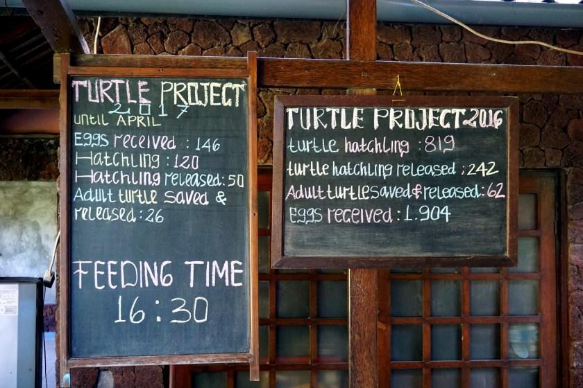 Turtle Project, Pemuteran