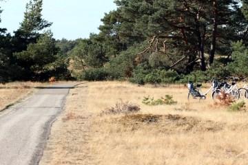 fietsen op de hoge veluwe