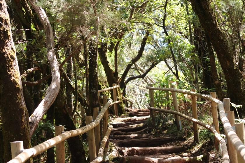Wandelen in Garajonay Nationaal Park op La Gomera