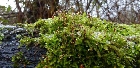 Schitterend mos