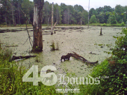 46hounds-goodboy
