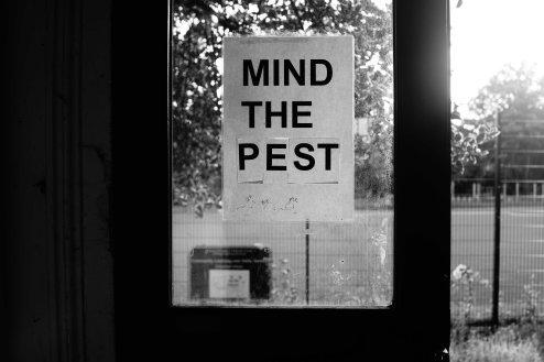 Mind the Pest