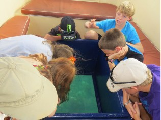 In the glass-bottom boat