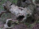 An ancient branch