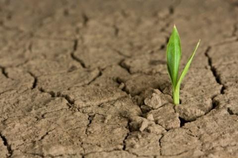 Permalink to: Hope – Rebirth of Dream Chasing