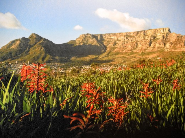 table-mountain-sa