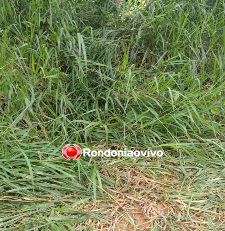 EMBOSCADA: Entregador de leite é assassinado a tiro por homem escondido em mata