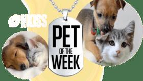 pet of the week logo