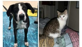 Pets Of The Week: Littles & Sue