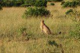 Safari 2012 119