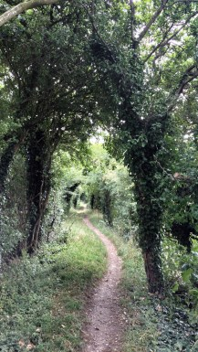 The Ridgeway Walk - From Wallingford to Stokenchurch