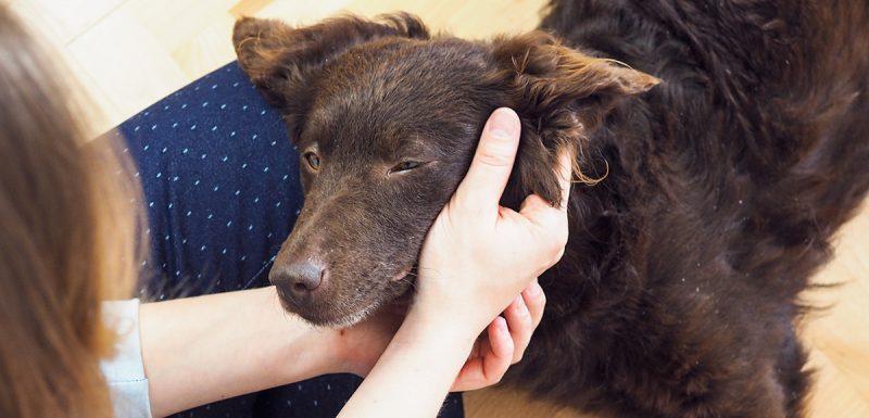 adopcja-psa-T1