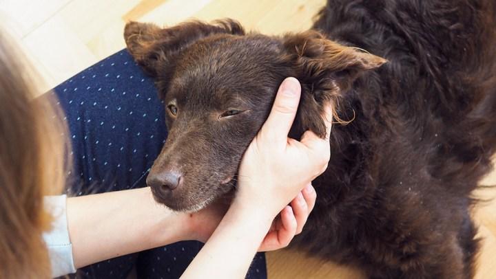 Adoptowaliśmy psa ze schroniska – historia Szyszki