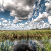 Weekly Photo Challenge: Near and Far in the Florida Everglades