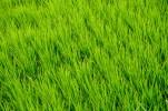 Green Things-4