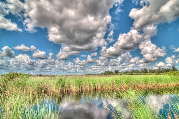 Everglades Wet Season