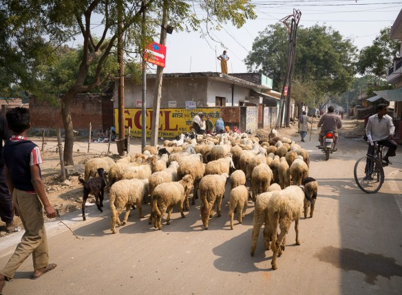 Rural Roads of India-3