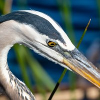 In Bird Photography the Focus is on the Eyes