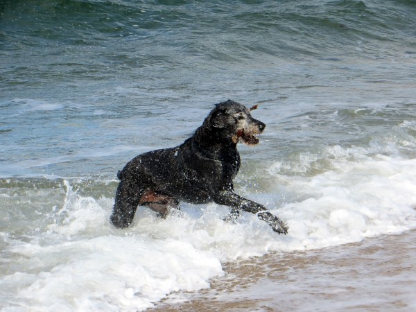 jack in ocean with stick