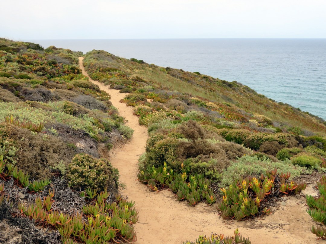 Rota trail