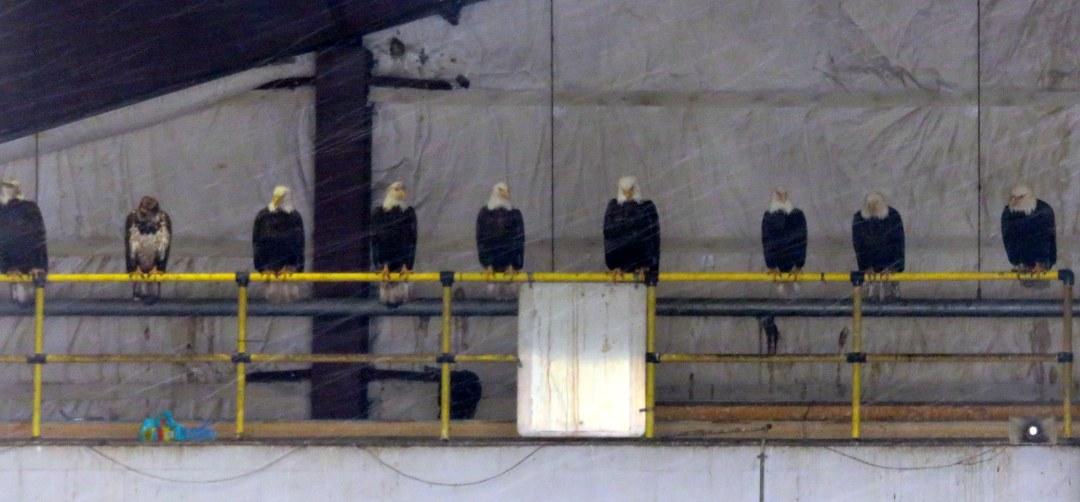 eagles dump