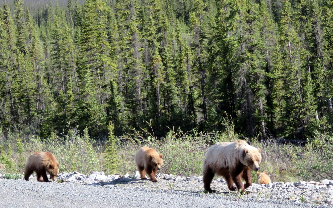 Bears on way to McCarthy