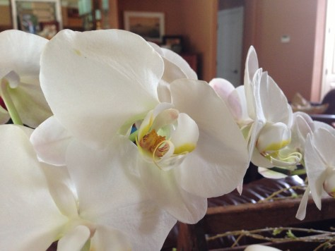 Living Room Orchids
