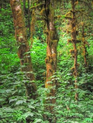 Lichen in Trees