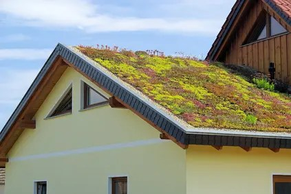 roof in summer