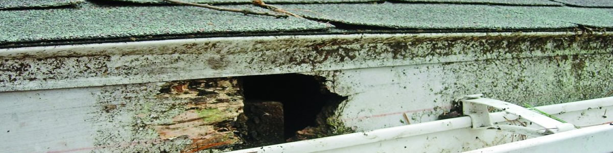 fascia board repair Norfolk Virginia 23529