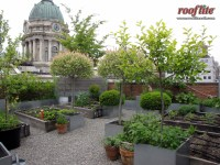 Intensive Rooftop & Intensive Green Roof Types Sc 1 St ...