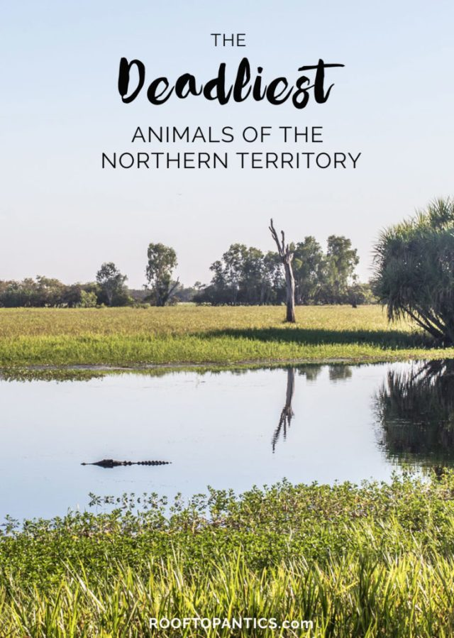 deadly_animals_northern_territory_australia_rooftopantics4