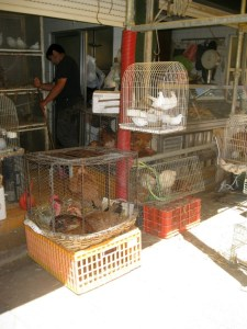 chicken cages at the Mercado do Bolhão market in Porto