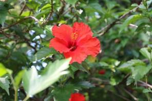 In Parks wie dem Jardin St. Martin kann man viele Blumenarten entdecken.