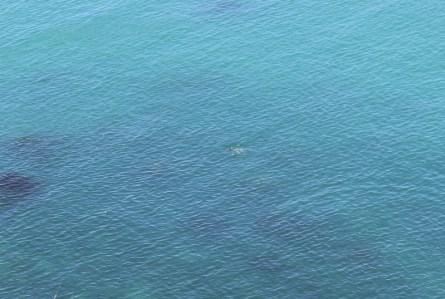 Die beiten kleinen Wellen waren zwei Delfine, die das Schwarze Meer vor Kap Kaliakra durchstreiften.