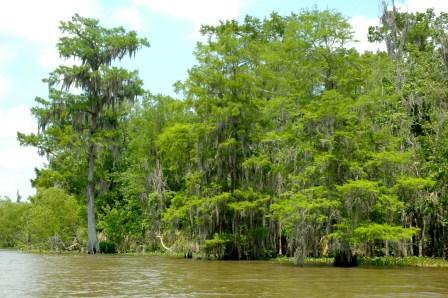 In den Sümpfen Louisianas. (Foto: WTS)