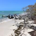 Florida Keys Sehenswürdigkeiten: Mehr als nur Key West