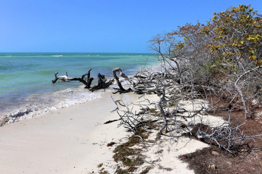 Idyllische Bäume am Strand im Bahia Honda State Park.