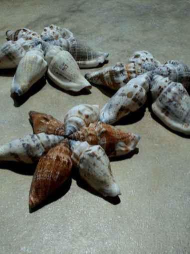 22 easy diy glitter shell crafts ideas (12)