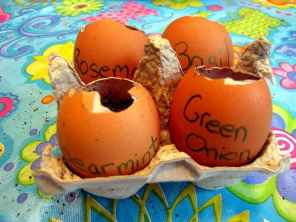 30 brilliant diy egg shell seed starters crafts ideas (28)