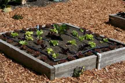 35 stunning vegetable backyard for garden ideas (10)