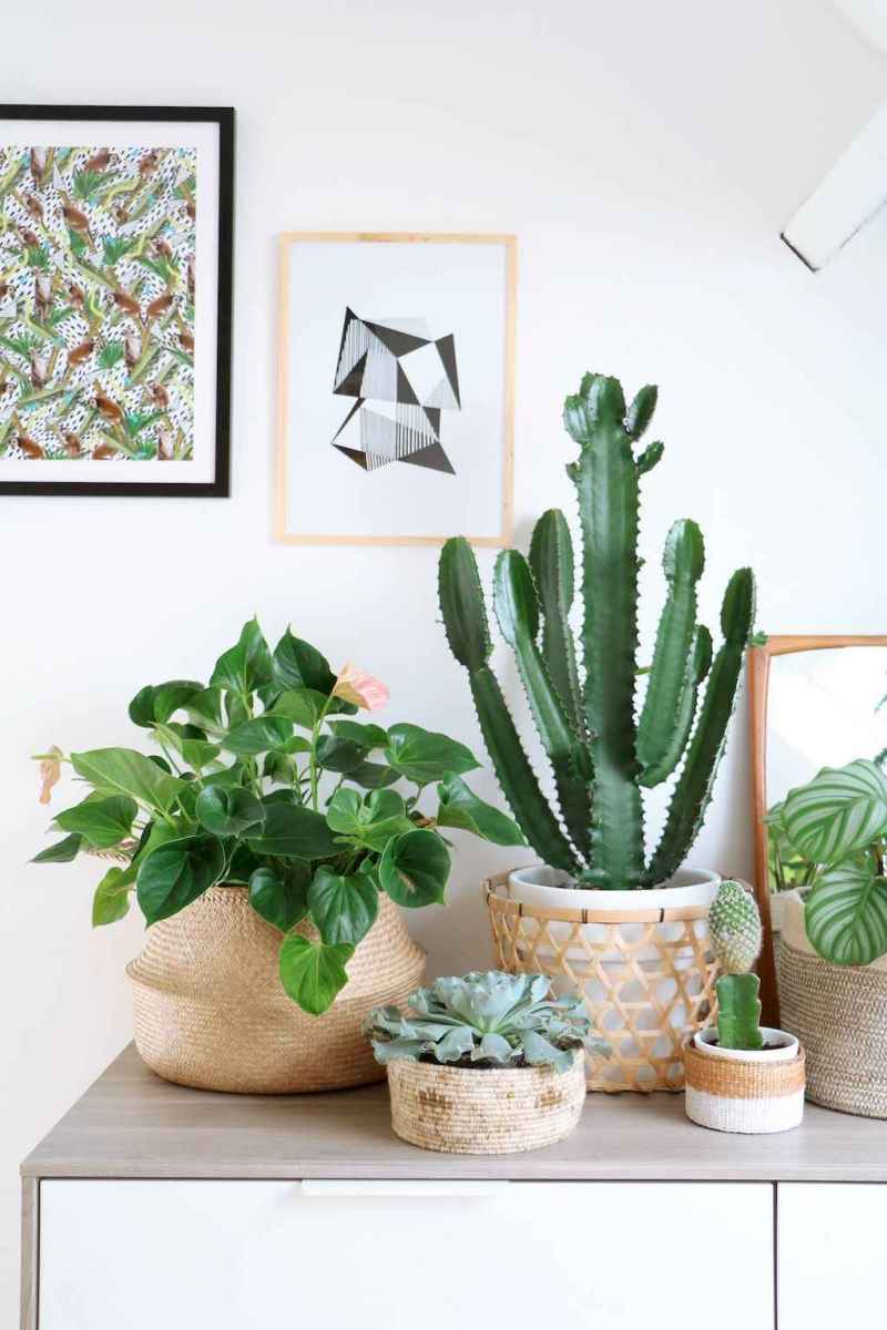 55 greeny indoor plants ideas that will purify your room's air (23)