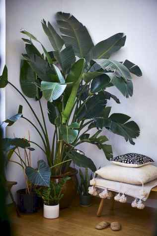 55 greeny indoor plants ideas that will purify your room's air (26)
