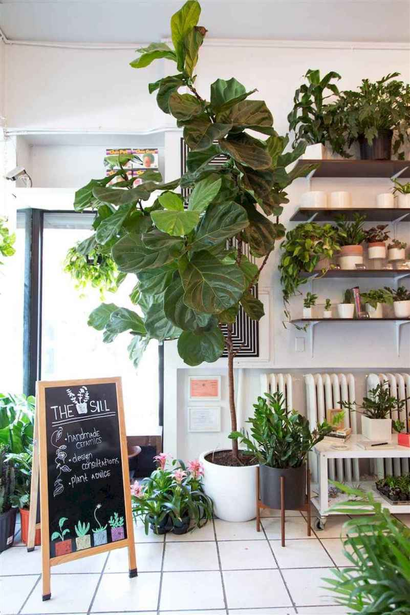 55 greeny indoor plants ideas that will purify your room's air (33)