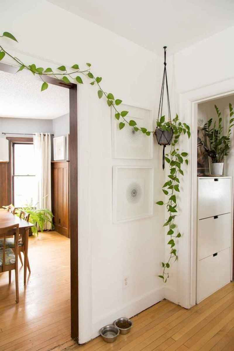 55 greeny indoor plants ideas that will purify your room's air (46)
